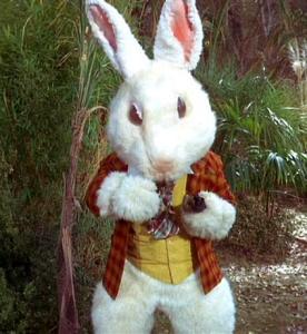 White_Rabbit,_2267